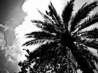 Palm, Barcelona
